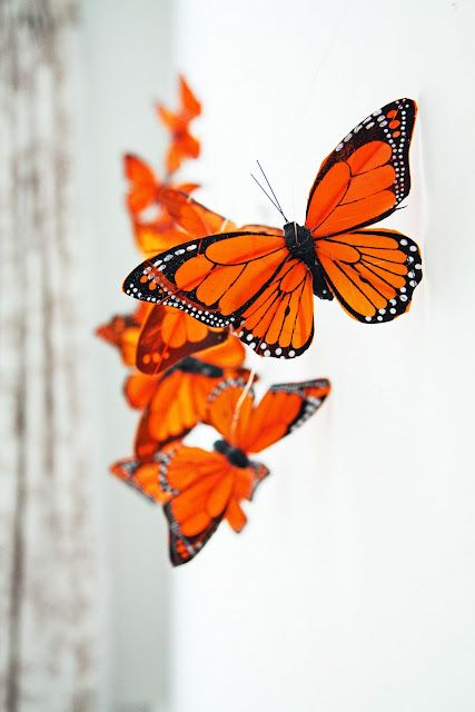 Love it!  String butterflies for a garland! #orange #butterflies #butterflyeffect