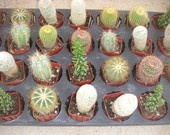 A Collection Of 5 Succulent Plants, Great For Terrarium Projects, Centerpieces, Container Gardens. $16.95, via Etsy.