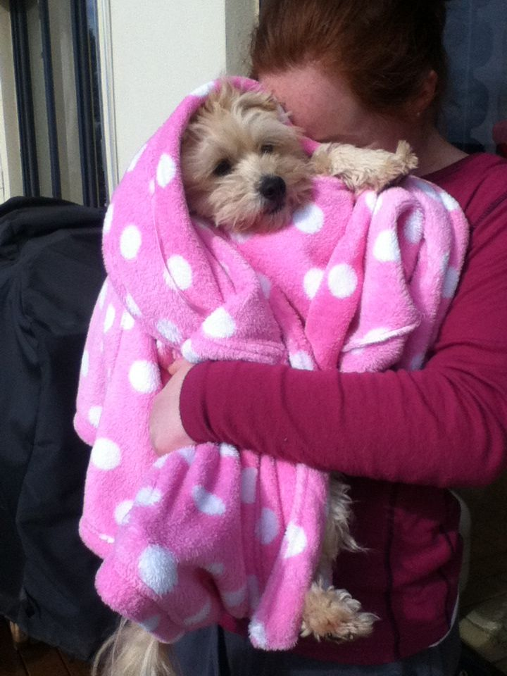 My cute dog wrapped up like a baby simba my dog