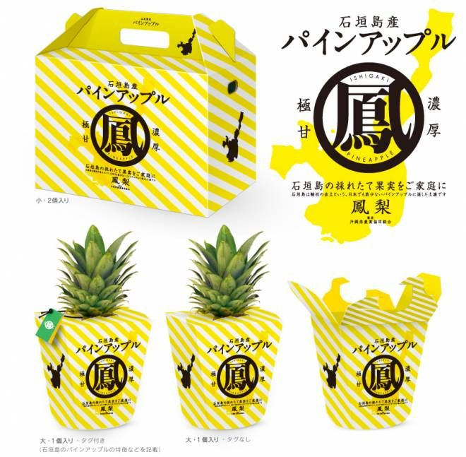 [ Ishigaki Island Pineapples ]  The red acidic soil of Ishigaki Island is perfect for growing pineapples, which are not often grown in the rest of Japan. Ishigaki is on average about 2 degrees warmer than the Okinawa Main Island, so the pineapples grown there are sweeter and stronger in flavor.   Ishigaki pineapples, picked ripe and ready to eat, have the perfect balance of acidity and sweetness only found in Japan-grown produce.