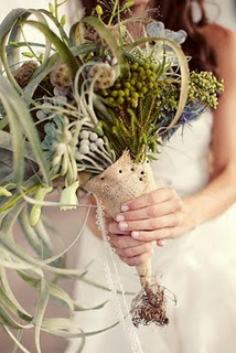 air plant cascading bouquet with scabiosa pods and berzelia