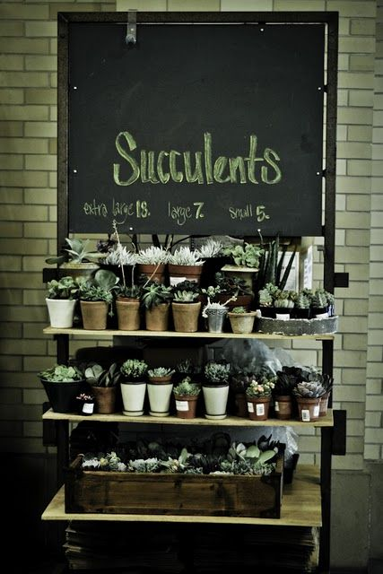 What a great idea - this would be a beautiful display to be able to give your guests a succulent as a wedding favor