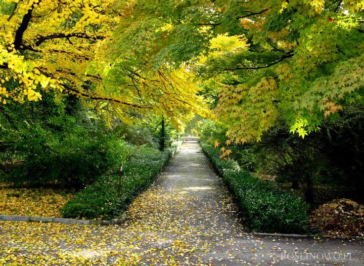 jesienna aleja w parku - Autumn alley in the park