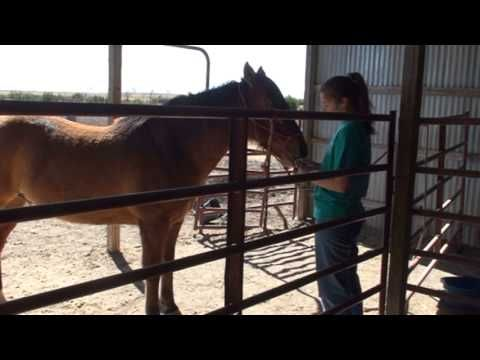 Using Aromatherapy For Horse Behavior Issues