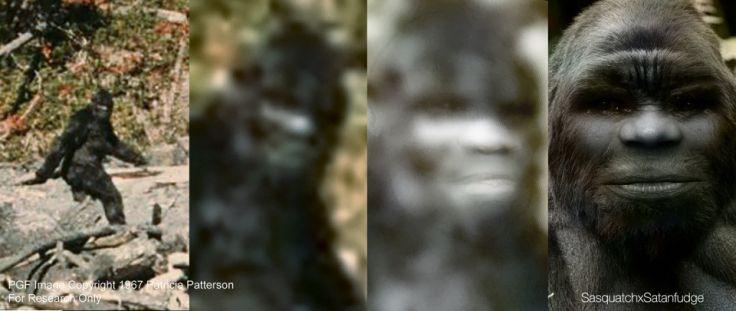 Bigfoot | Photo | Patterson-Gimlin Face
