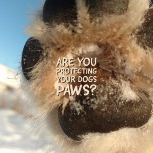 Are You Protecting Your Dogs Paw Pads from Injury this winter? How to Prevent Dog Paw Pad Injuries. Dog Paw Pad Injury Prevention Guide.