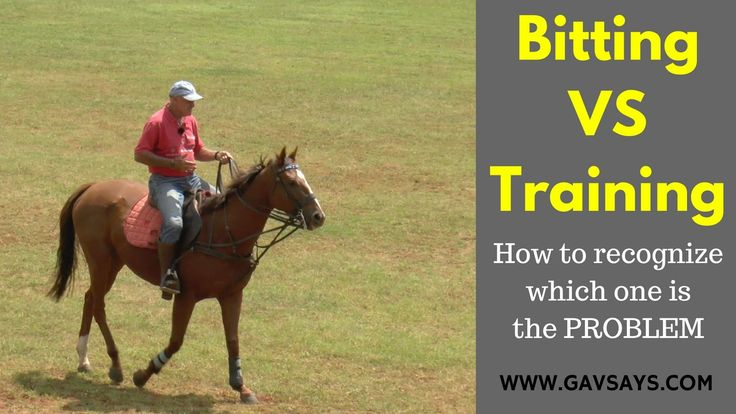www.GavSays.com: Bitting vs Horse Training - Here's a brilliant lesson on how to tell which one is the problem with your horse...