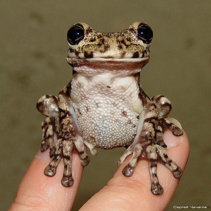 Little cutie :): Frogs Tiny, Froggy Smile, Friends Frogs, A Kiss, Faces, Frogs Friends, Frogs 123, Animals Frogs Lizards Snak, Tiny Frogs