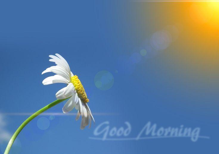 für euch  einen  schönen   tag  #gutenmorgen