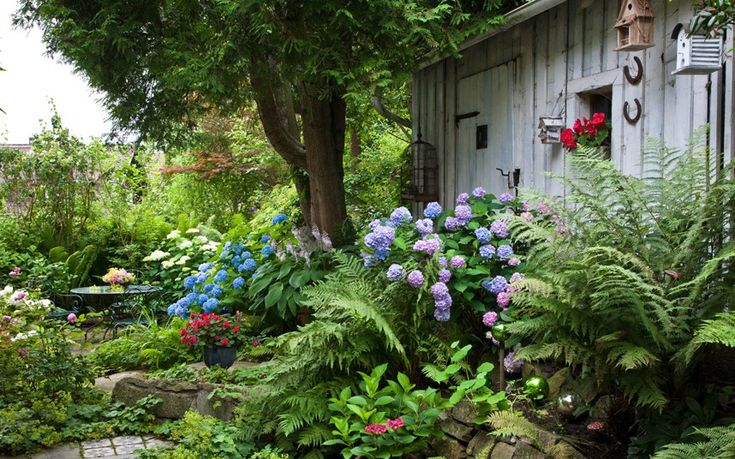 See how beautifully ferns combine with flowering shade plants such as hydrangea in a shady garden?