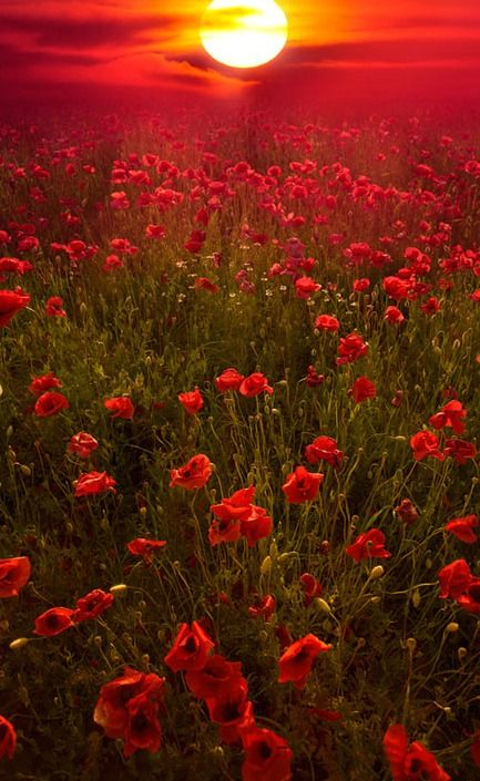 50 Mind Blowing Examples Of Landscape Photography. Red PoppiesRed FlowersField  ...