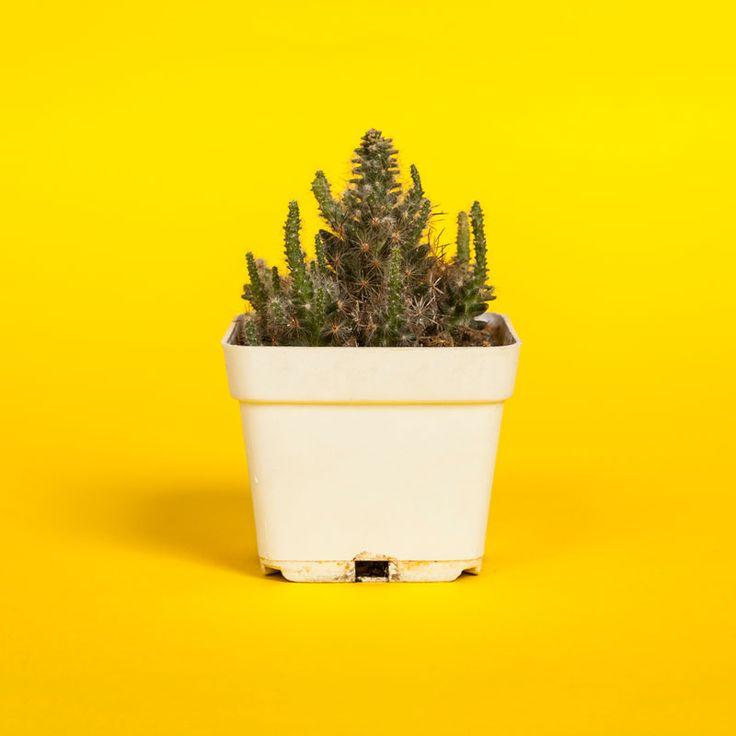 Cactus #jungle #selva