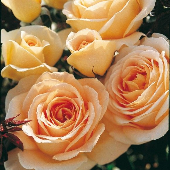 Honey Bouquet®