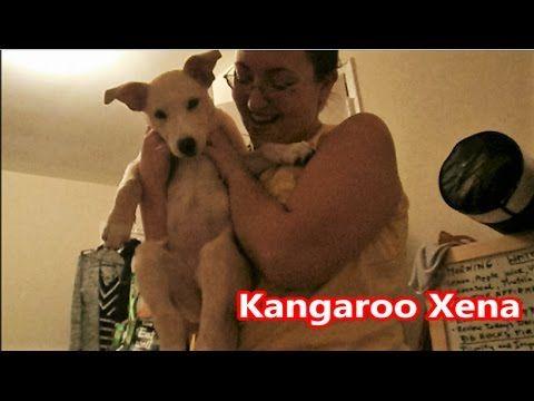 Kangaroo Xena - Funny Puppy Moments Vlog