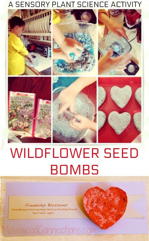 Wildflower Seed Bombs A Sensory Plant Science Activity. #sensory #plantscience #valentinesday #kidsactivities #mosswoodconnections