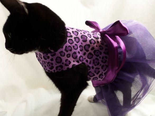 rockin dogs and cool cats designer cat clothes pet