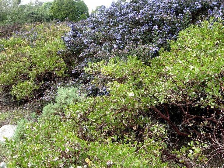 The 25 Best California Native Garden Ideas On Pinterest