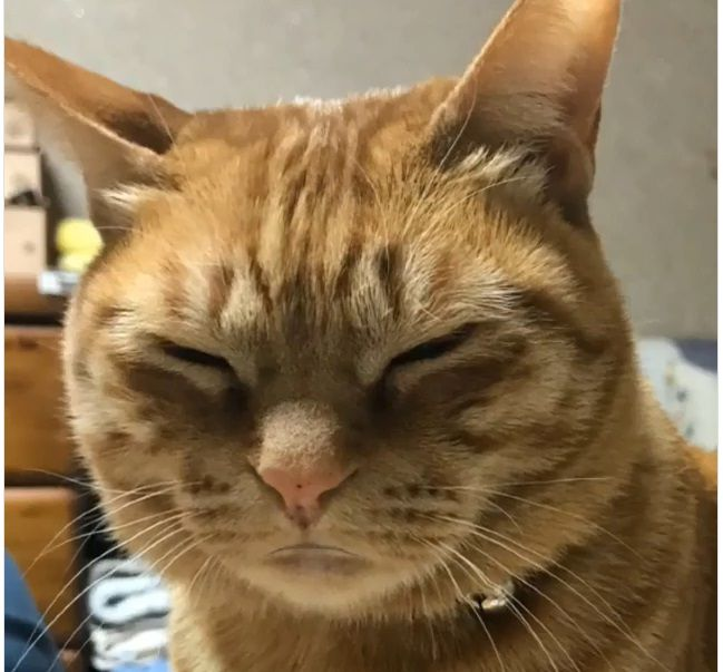 動画 猫 が しゃべる