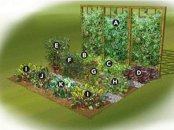 Best 25+ Small vegetable gardens ideas on Pinterest ...
