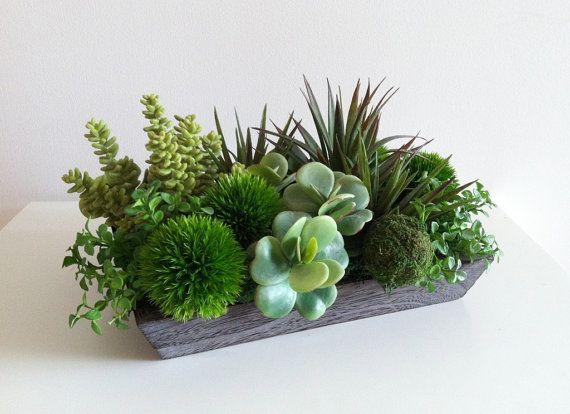 Piante moderne di disposizione delle piante grasse Pinterest Cactus, fiori e piante-9074