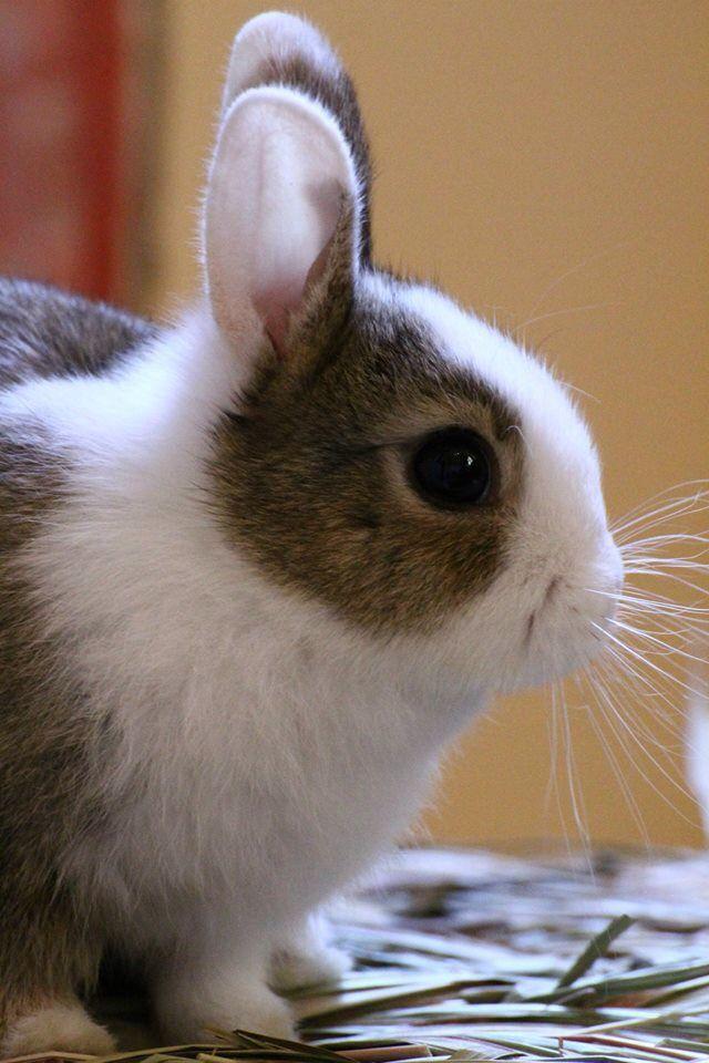 Lamú, la mia coniglietta da cucciola