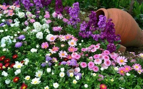 Схема выращивания клумб непрерывного цветения
