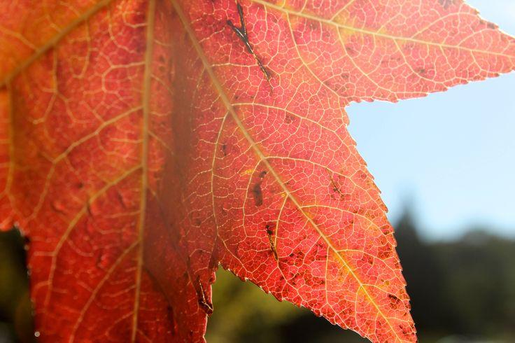 Leaf in Stanthorpe