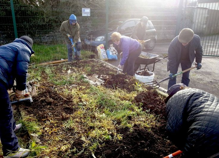 Start Up Essential Tips for Community Gardens