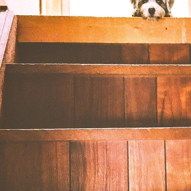 #dogwalk  #cutedogs  #petofinstagram  #doglife  #ノーフォークテリア #愛犬 #チャコ #チャコスタグラム #norfolkterrier #犬 #犬バカ部  #petstagram #pets_of_instagram #pet #テリア #ブラックタン #blackandtan #instadog #doglover #いぬすたぐらむ  #イヌスタグラム  #dog  #dogstagram #dogs  #puppydog  #dogdays  #mydog  #いぬとの暮らし  #いぬ #norfolkterriersofinstagram