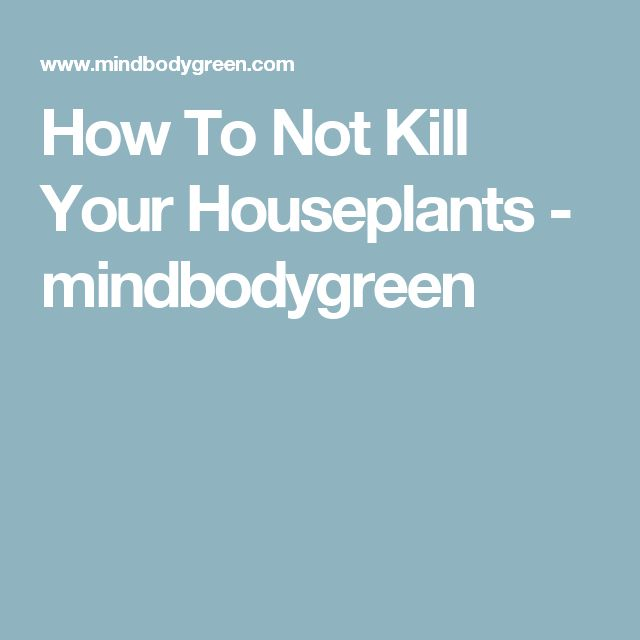 How To Not Kill Your Houseplants - mindbodygreen