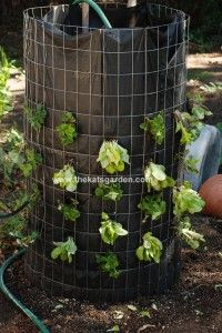 organic lettuce planted in a vertical tower