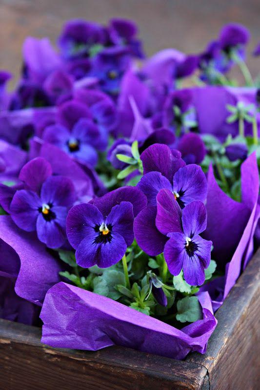 Krat met viooltjes - Crate with pansies #purple