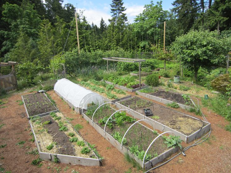 Raised Beds With Hoops And Hop Supports Season Extension