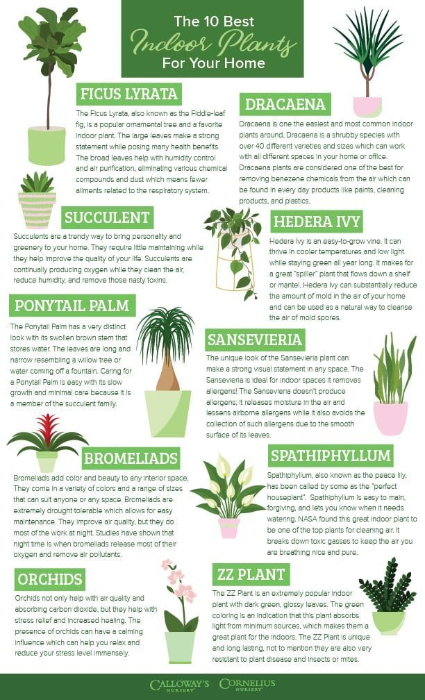 The 10 Best Indoor Plants for Your Home | Calloway's Nursery