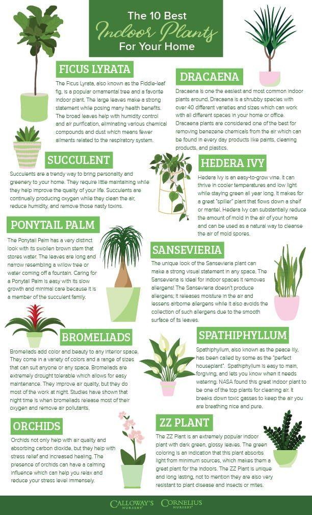 Die 10 besten Zimmerpflanzen für Ihr Zuhause | Calloway's Nursery