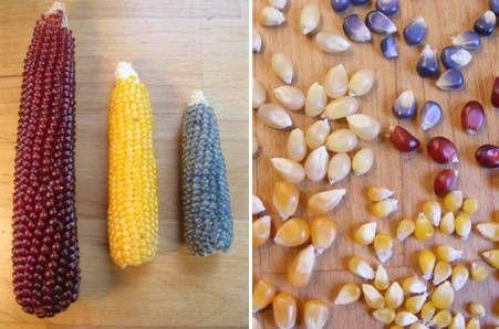 Rode, witte, gele, blauwe, grote en kleine popcorn mais. (ook om zelf te planten)