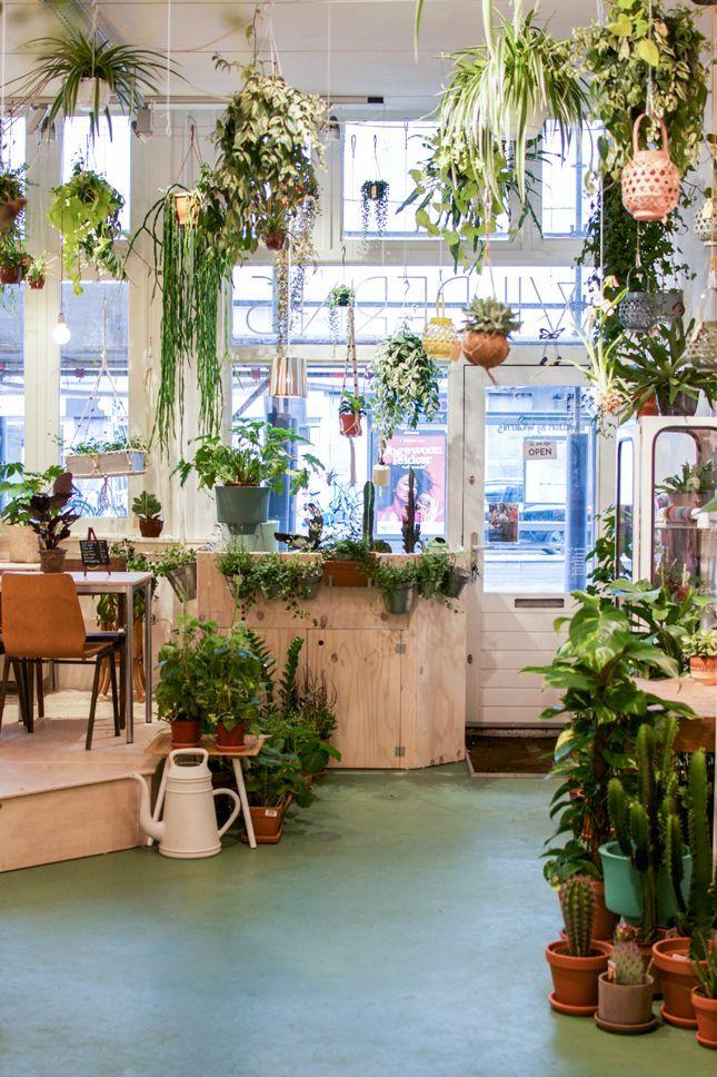 Wildernis, Amsterdam, Plants, Urban Jungle Bloggers, Plant Shopping,  Shopping Tip Amsterdam. Interior GardenInterior DesignHome ...