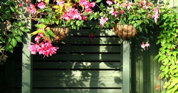 Como pendurar ganchos de plantas no teto. Pendurar plantas é uma forma atraente de incorporar uma aparência natural em pátios, pavimentos ou áreas de entretenimento ao ar livre. Como cestas podem ficar pesadas com água e o crescimento da planta, é essencial utilizar um gancho que aguente o peso. Escolha as áreas do seu quintal para pendurar ganchos que recebam de seis a oito horas de luz ...