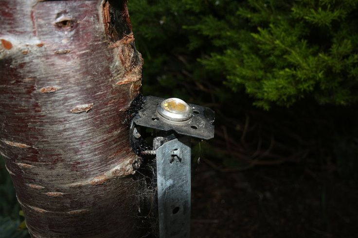 Up light on trunk of tree