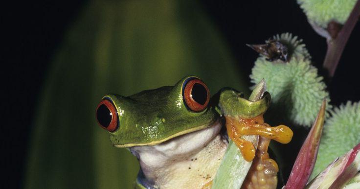 Animales herbívoros, omnívoros y carnívoros . Los animales se dividen en tres grupos distintos en base a lo que comen. Esta es una forma natural de agrupar a los animales. Los que comen plantas son los que comen carne son carnívoros son carnívoros, y los animales que se alimentan tanto de plantas como de animales son omnívoros. Lo que un animal utiliza como combustible a menudo puede dar ...