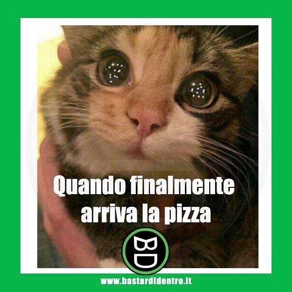 """""""Mi piace"""": 73.4 mila, commenti: 212 - BastardiDentro (@bastardidentro) su Instagram: """"Non esiste gioia più grande! Seguici su youtube/bastardidentro #bastardidentro #pizza #fame #gatto"""""""