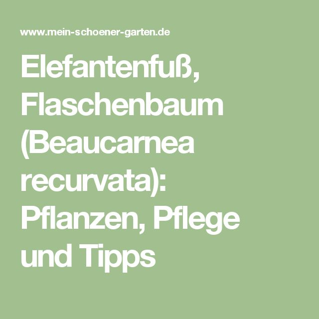 591 Melhores Imagens Sobre Zimmerpflanzen - Balkon - Terrasse No ... Zimmerpflanzen Pflege Pflanzenarten