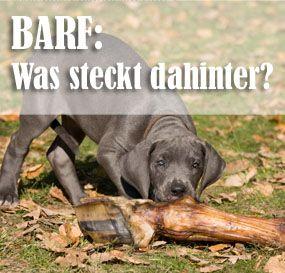 BARF - Was steckt dahinter