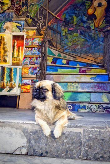 Street Art . Cuba
