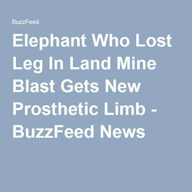 Elephant Who Lost Leg In Land Mine Blast Gets New Prosthetic Limb - BuzzFeed News