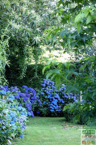 La couleur des fleurs de l'hortensia est fonction du sol: bleues à mauves en sol acide et rouges à rose près d'un pH 7. On peut donc jouer avec. Comment faire ?