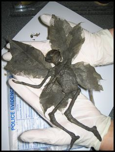 A mummified fairy? http://web.archive.org/web/20070406172838/http://www.lebanoncircle.co.uk/DeadFairy.htm