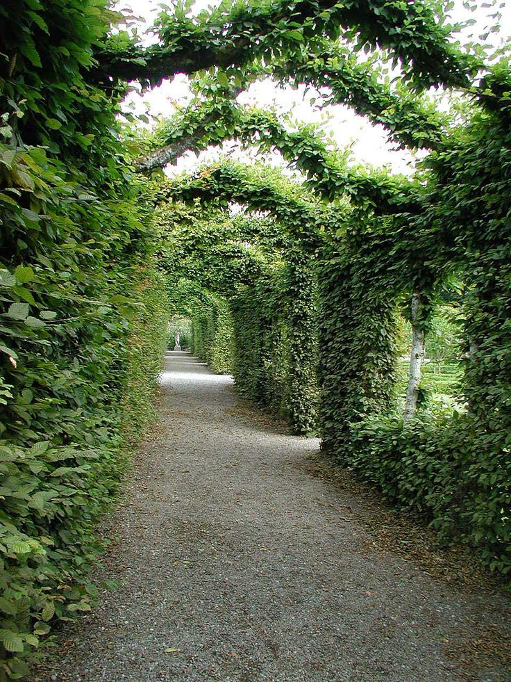 garden arch vines if only we had enough room in our garden