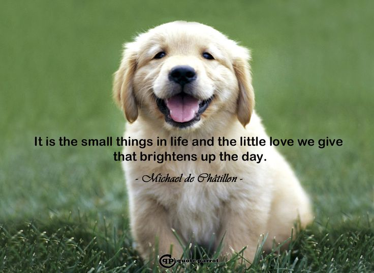 It is the small things in life and the little love we give that brightens up the day. - Michael de Châtillon