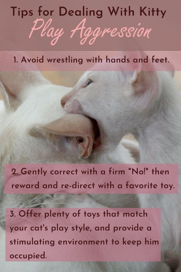 How To Stop Play Aggression In Kittens And Cats In 2020 Cat